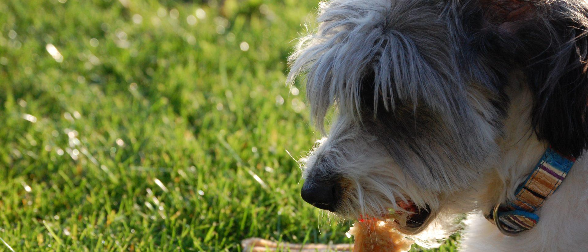De Geknipte Hond